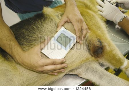 Heart Monitor Dog