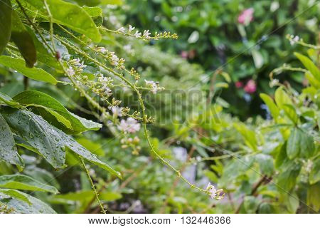 Rain Water Drop On Tree Bush And Flowers Bunch With Bokeh For Fresh Nature Background, Rain Drop And