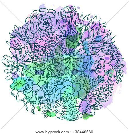 Hand drawn succulent bouquet on white background with watercolor texture. Vector illustration in sketch graphic style.