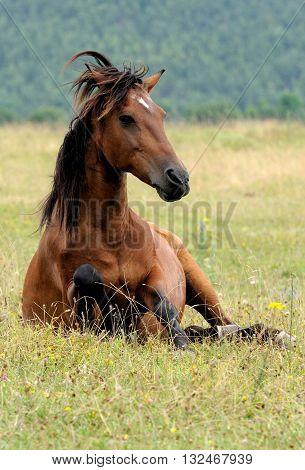 Portrait of nice quarter horse clos up