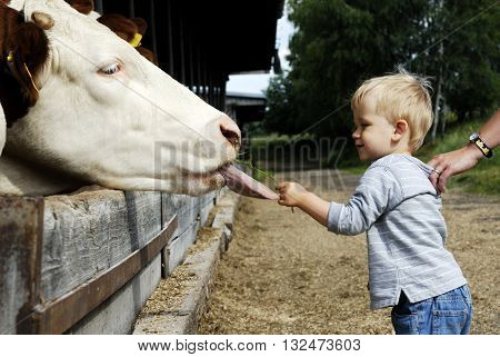 Young little child boy feeding cow with grass