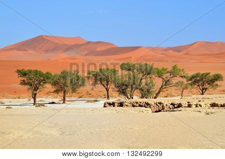 Beautiful landscape with big red dunes at sunrise Sossusvlei Namib Naukluft National Park Namib desert Namibia