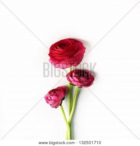 red roses or ranunculus isolated on white background. Flat lay top view