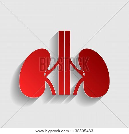 Human kidneys sign. Red paper style icon with shadow on gray.