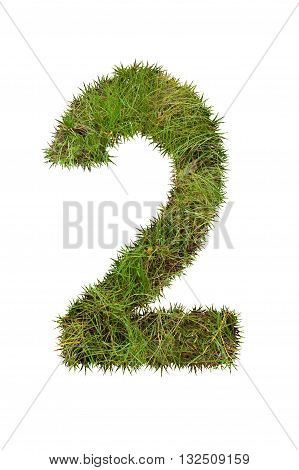 Grass number two, isolated on white background, 2
