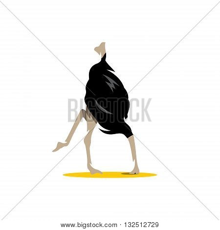 Scared ostrich burying its head in sand concept. scimitar