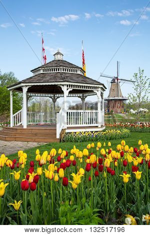HOLLAND, MICHIGAN-MAY 07, 2015: A gazebo and an authentic wooden windmill from the Netherlands rises behind a field of tulips in Holland Michigan at Springtime.