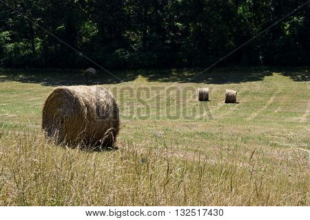 Bales of hay landscape background rural Georgia, USA.