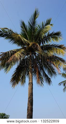 Tropical Landscape In Sukhothai