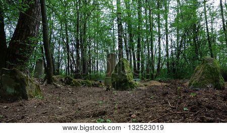 old cemetery with trees and mossy rocks