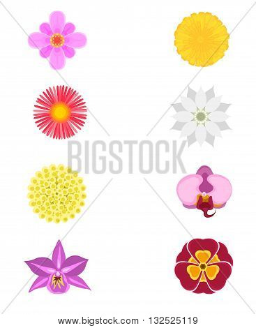 Vector illustration of a set of eight flowers