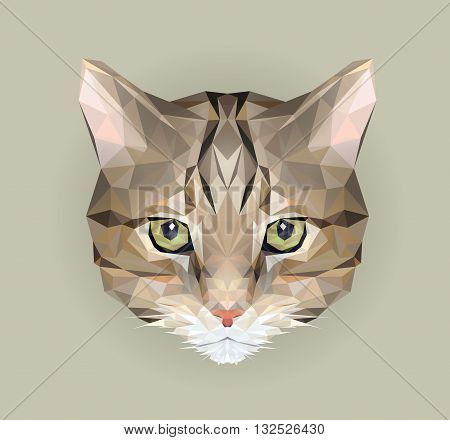 Cat low poly design. Triangle vector logo illustration of animal for use as a print on t-shirt and poster. Street cat in polygon style. Small mustache kitty. Domestic cat.