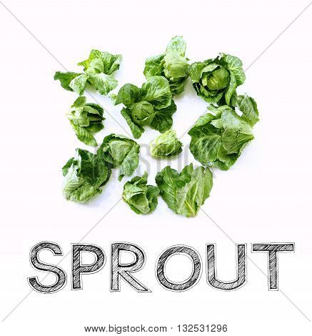 Sprout vegetable Raw material for cook on white background photo isolate in my kitchen and have design my font free hand word.