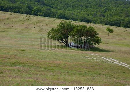 lonely structure between the trees in the field