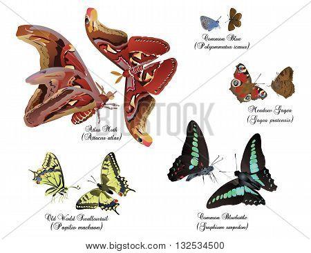 Amazing butterflies set - pairs of butterflies