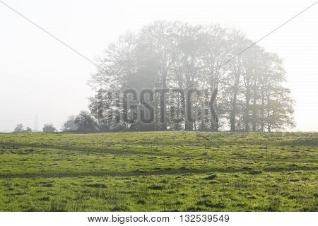 Trees on a hillside shrouded in morning mist