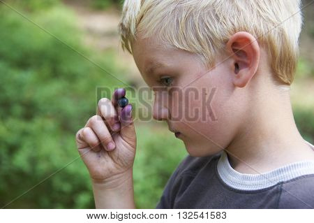 Young boy eating blueberries in a summer forest