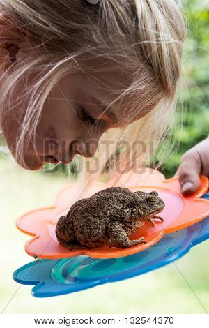 A cute young girl looking at toad (frog)