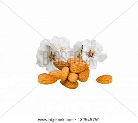 Almonds nuts and flowers isolated on white background. Fresh almonds and white flowers close up. Studio image of almonds with flowers. Group of nuts and flowers isolated on white.