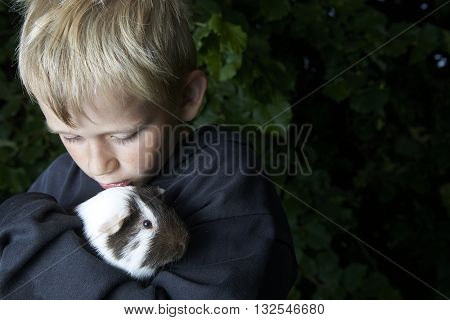 Pet animal Guinea pig in child's hands.