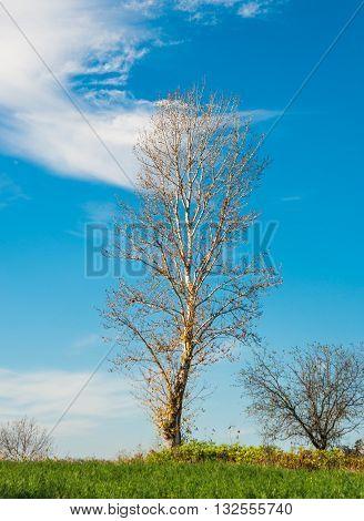 foliage, garden, grass lonely tree in a field