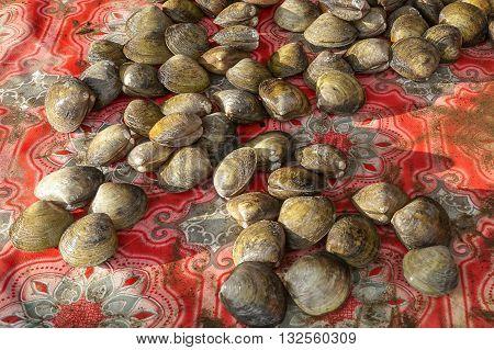 Close-up local tropical clams at Salut village,Sabah,Borneo.