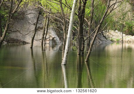 Trees growing out of water and reflecting at the lakeside great wall scenic area in Beijing China.