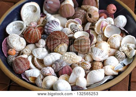 A ceramic bowl full of sea urchin and different types of seashells to decorate home
