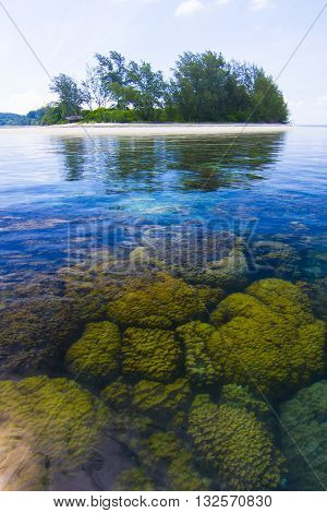 Beautiful Coral in Koh Matsum Island.Koh Samui surat thani Thailand.