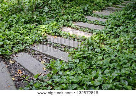 cement plate path in nature garden Thailand