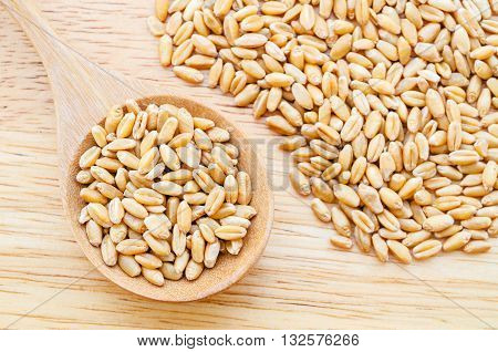 wheat kernels against in wood spoon on wood background