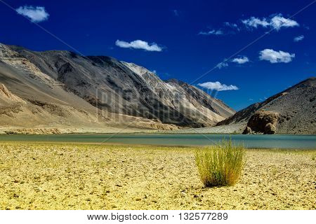 Mountains surrounding Chagor tso - Lake with blue sky and small vegetation on dry bank of Chagor Tso. It is huge lake in Leh Ladakh Jammu and Kashmir India and on way to Pangong Tso -lake