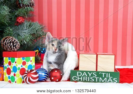 Calico kitten coming out of a stocking next to a christmas tree with colorful presents and holiday balls of ornaments next to Days until Christmas light beech wood blocks blank for your numbers