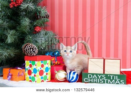 Orange tabby kitten coming out of a stocking next to a christmas tree with colorful presents and holiday balls of ornaments next to Days until Christmas light beech wood blocks blank for your numbers
