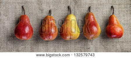 four colorful pears closeup on vintage burlap background