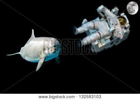 Dolphin In Space Universe Background Look At You