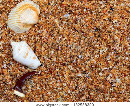 Seashells And Claw From Crab On Sand