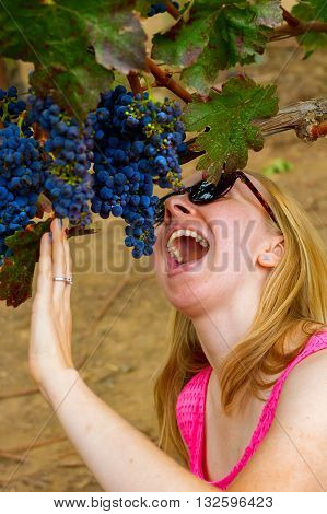 A woman crouches under a bunch of grapes growing on a vine at a vineyard and pretends to be about to eat the whole bunch.