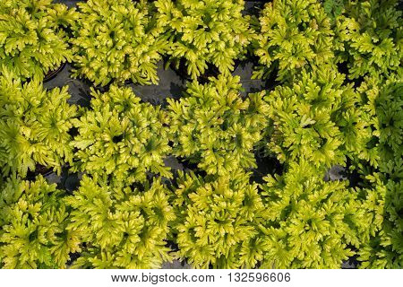 Plants, Also Called Green Plants, Are Multicellular Eukaryotes Of The Kingdom Plantae