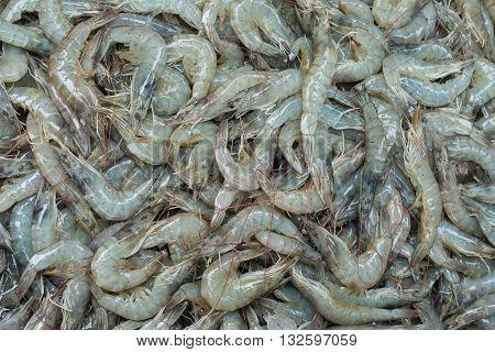 Fresh Shrimp (White Gulf Shrimp) picture .