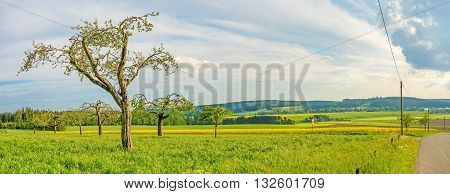 Green Meadow With Fruit Trees Panorama - Rural Landscape