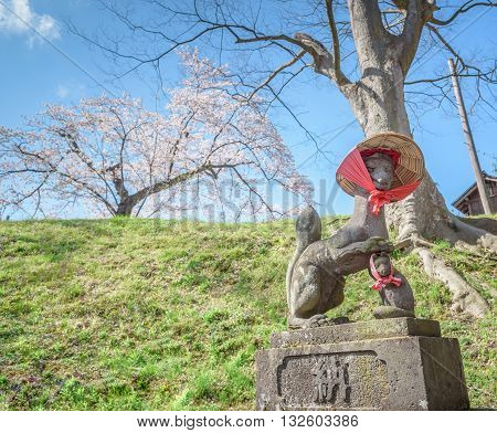FUKUSHIMA JAPAN - APR 152016: Fushimi inari stone fox guarda wooden gates at Tsuruga Castle surrounded by hundreds of sakura trees.
