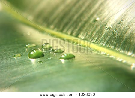 Drops On A Leaf. Great Shoot. Great Details