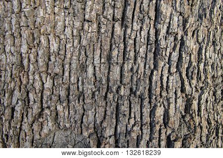 Tree bark hi-res brown wood texture background.