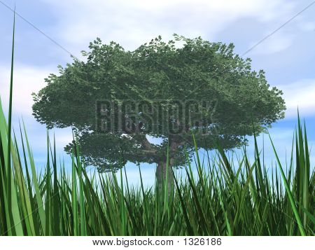 Tree With Green Dense Foliage