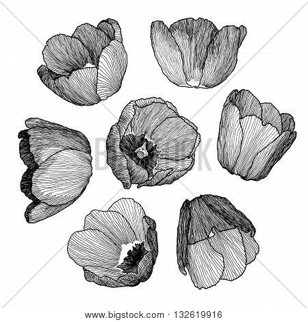 Vector Graphic Hand-drawn Ink Set Of Tulip