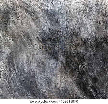 Wolf skins texture - close-up 3D rendering. Fashion element design.