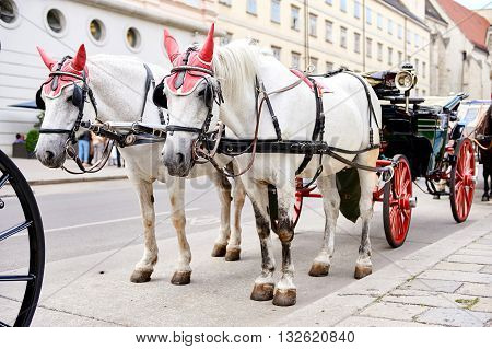 Horse-drawn Carriage Waiting For A Tourists In The Old City In Vienna, Austria