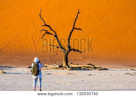 Travel to Namibia. Namib-Naukluft National Park. White bottom of a dried-up lake surrounded by orange dunes. Elderly woman - tourist photographing picturesque dried tree