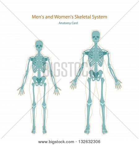 Anatomy guide. Male and female skeleton. Vector Illustration.